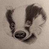 Badger_(Pencil) Animals by Snugbat Illustration