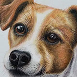 Jack_Russell_Terrier_(Colour_Pencil) Animals by Snugbat Illustration
