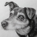 Katie_(Crossbreed_in_Pencil) Animals by Snugbat Illustration