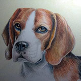 Tilly_(Beagle_in_Watercolour_Pencil) Animals by Snugbat Illustration